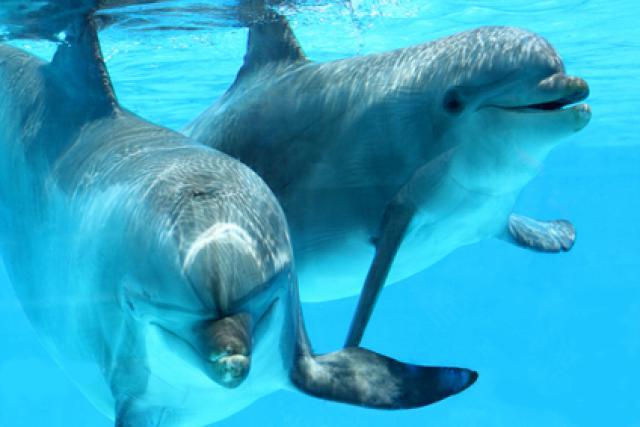 Как живут дельфины