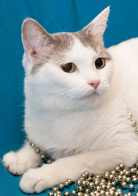 2016-01-08 22-35-43 Наши подопечные здоровые и не очень более 42 кошек(22хроника) 2собаки у одной эпилепсия у 2й рак, хорёк (456x649, 321Kb)