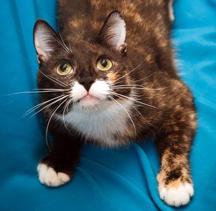 2016-01-08 22-37-53 Наши подопечные здоровые и не очень более 42 кошек(22хроника) 2собаки у одной эпилепсия у 2й рак, хорёк (423x414, 286Kb)