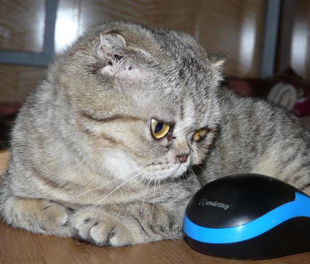 2016-01-08 22-38-40 Наши подопечные здоровые и не очень более 42 кошек(22хроника) 2собаки у одной эпилепсия у 2й рак, хорёк (627x534, 630Kb)