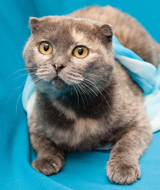 2016-01-08 22-39-09 Наши подопечные здоровые и не очень более 42 кошек(22хроника) 2собаки у одной эпилепсия у 2й рак, хорёк (543x644, 512Kb)