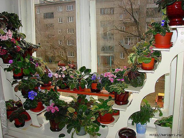 4497432_dlya_cvetov (640x480, 288Kb)