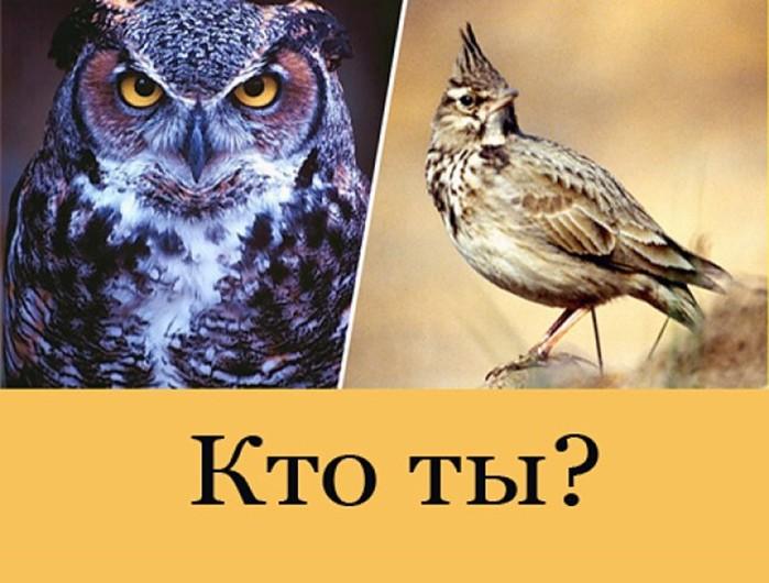 3470549_sova_jar_kto (700x530, 84Kb)