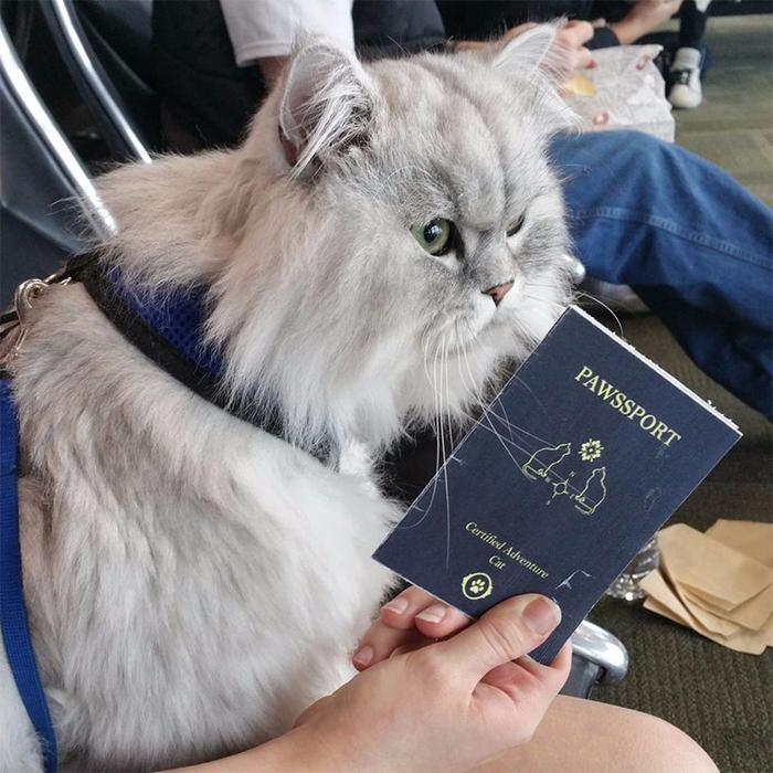 коты из интернета 2 (700x700, 469Kb)
