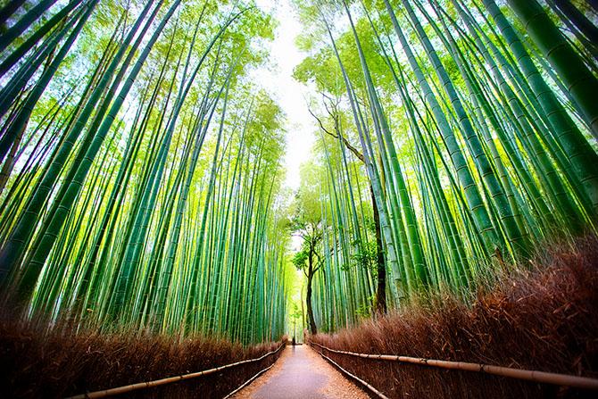 Бамбук, Япония (670x447, 586Kb)