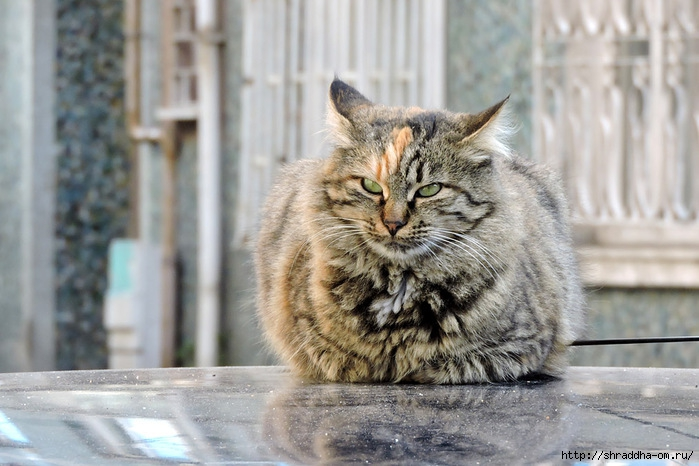Котик (22) (700x466, 217Kb)
