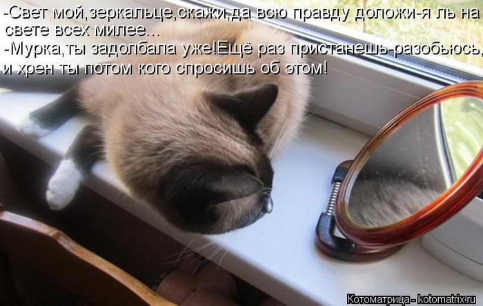 kotomatritsa_yx (700x444, 53Kb)
