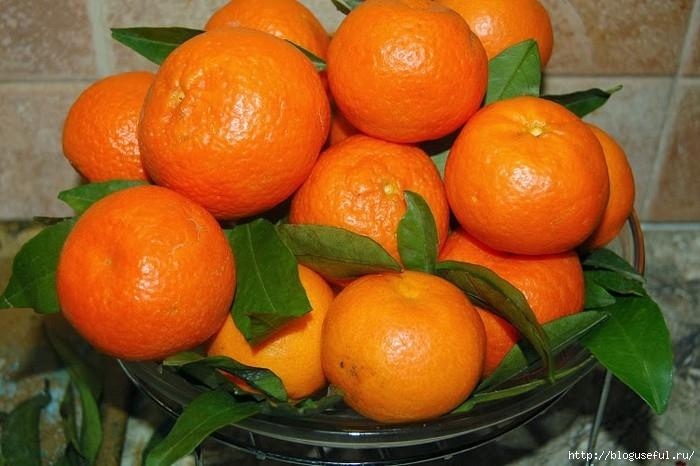 мандарины (700x466, 201Kb)