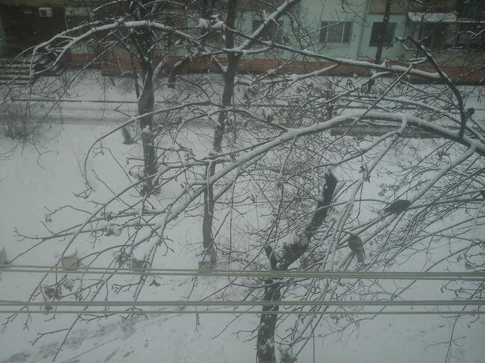 снег2 (700x524, 333Kb)