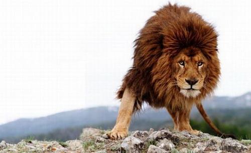 фото картинки львы