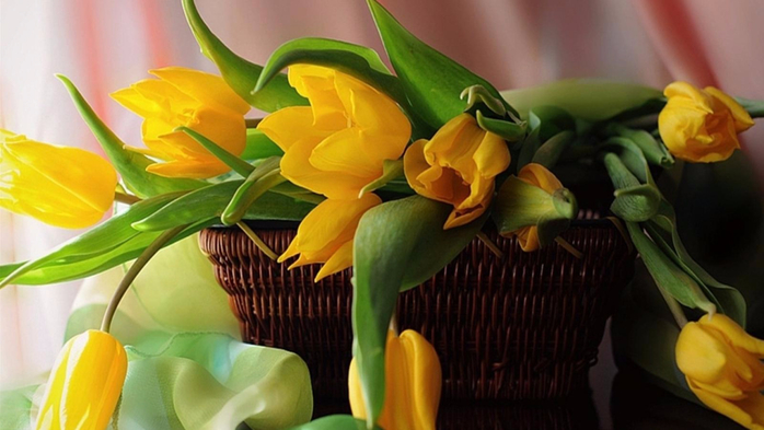 yellow_tulips_in_a_basket_still_life_nature_1600x900_hd-wallpaper-1465327 (700x393, 275Kb)