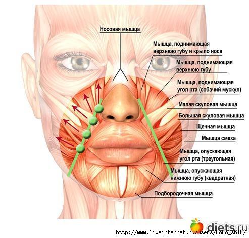 От чего дергается нерв над губой
