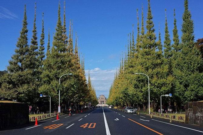 аллея деревьев кинго токио 4 (670x446, 295Kb)