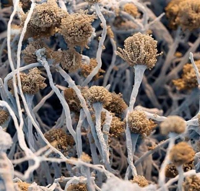 Лечение рака/5490558_ (641x610, 101Kb)