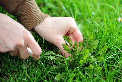 weeding (500x337, 98Kb)