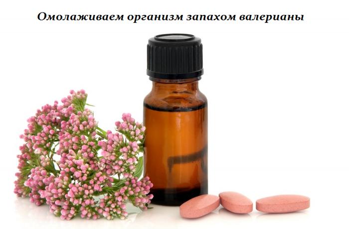 1453550235_Omolazhivaem_organizm_zapahom_valerianuy (700x460, 238Kb)