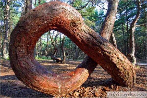 Странно-причудливые деревья 25 (600x400, 300Kb)