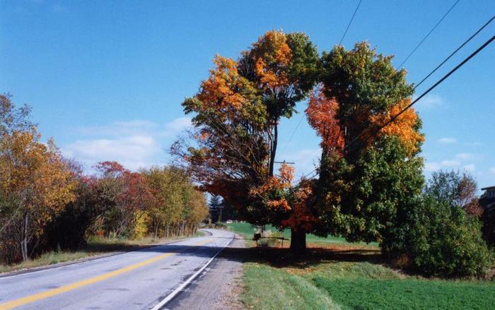 Странно-причудливые деревья 22 (700x439, 355Kb)