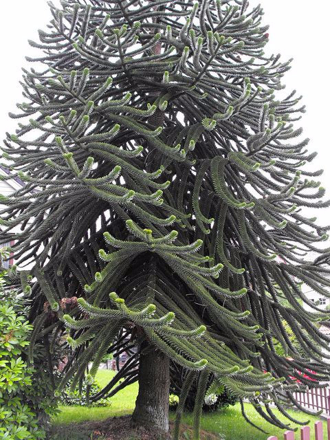 Странно-причудливые деревья во это ёлочка! (480x640, 407Kb)