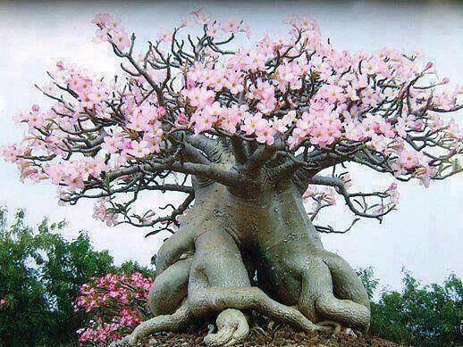 Странно-причудливые деревья 4 (518x389, 295Kb)