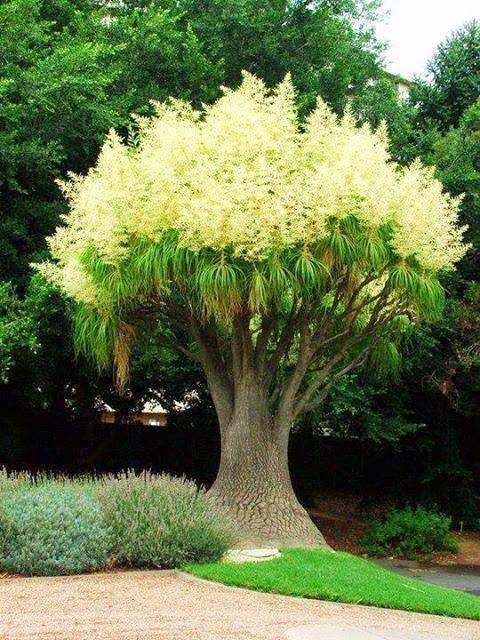 Странно-причудливые деревья 2 (480x640, 408Kb)