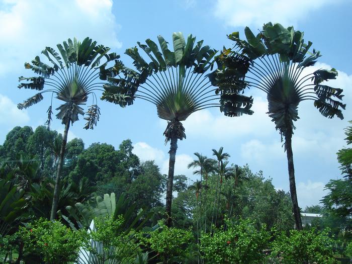 Странно-причудливые деревья 20 (700x525, 571Kb)