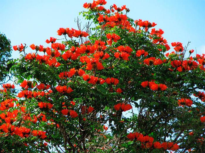 Странно-причудливые деревья 32 (700x521, 622Kb)