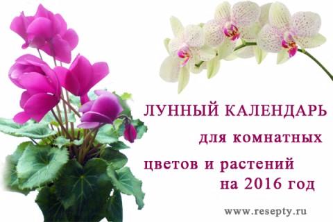 Православный церковный календарь на июнь 2016 год с