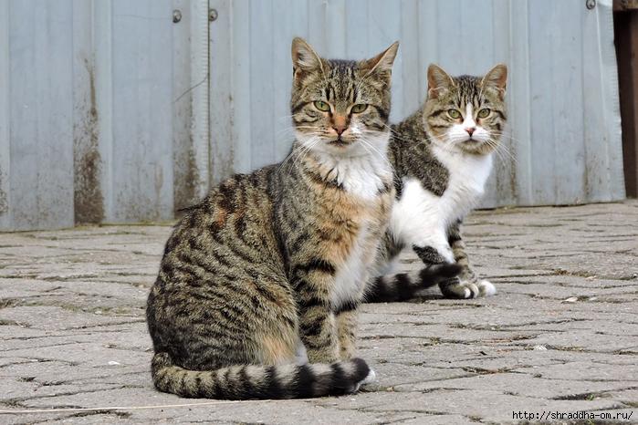 Котик (17) (700x466, 296Kb)