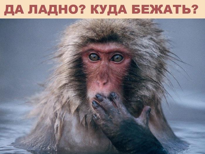"""alt=""""������ � ����� � ����""""/2835299_obezyana (700x526, 128Kb)"""