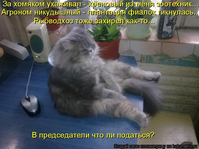 kotomatritsa__K (700x524, 357Kb)