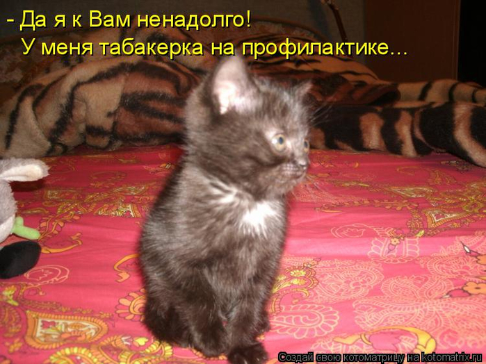 kotomatritsa_8L (700x524, 410Kb)