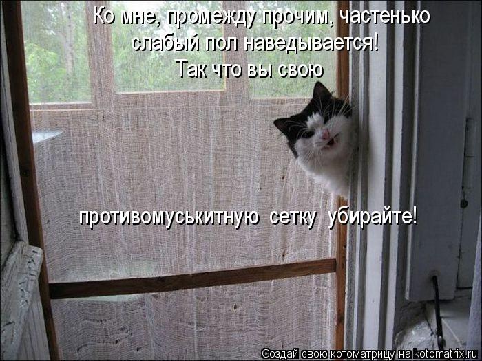 kotomatritsa_d3 (700x525, 295Kb)