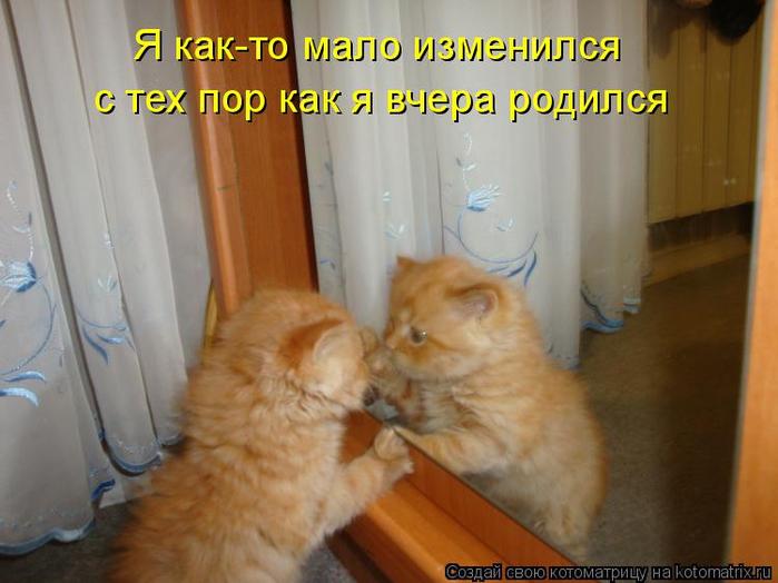 kotomatritsa_h (700x524, 313Kb)