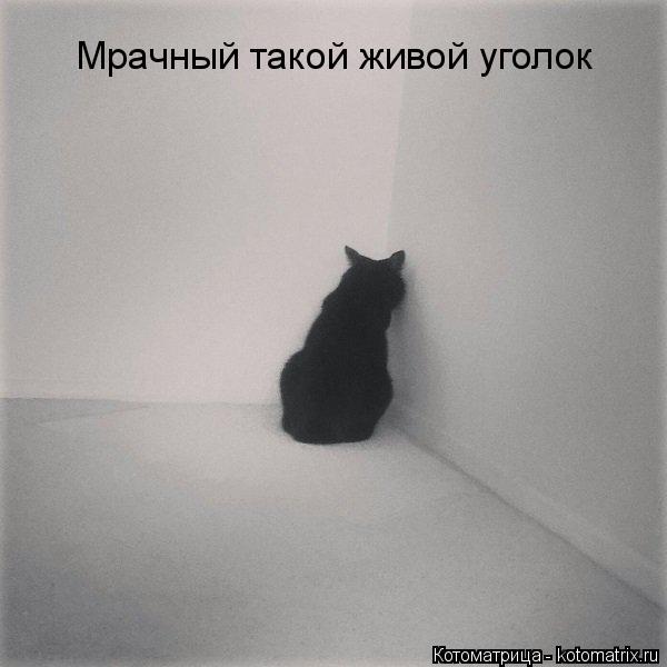 kotomatritsa_JP (600x600, 126Kb)