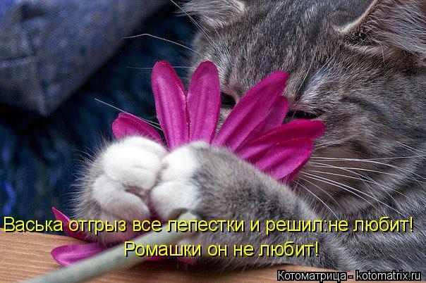 kotomatritsa_l (604x402, 288Kb)