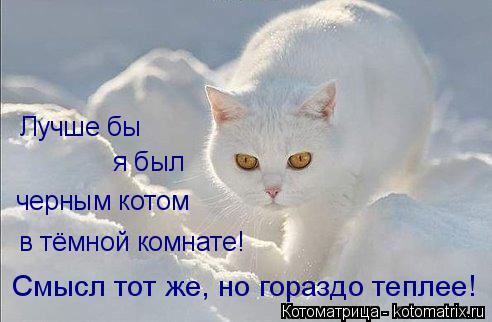 kotomatritsa_pw (492x322, 126Kb)