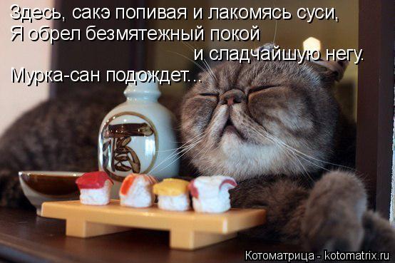 kotomatritsa_S- (554x369, 188Kb)