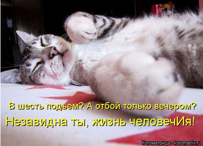 kotomatritsa_xb (700x504, 279Kb)