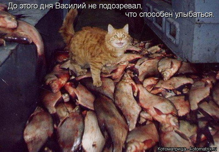 kotomatritsa_Y9 (700x488, 368Kb)