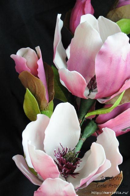 Цветы МАГНОЛИИ из сахарной мастики или холодного фарфора (4) (425x640, 122Kb)