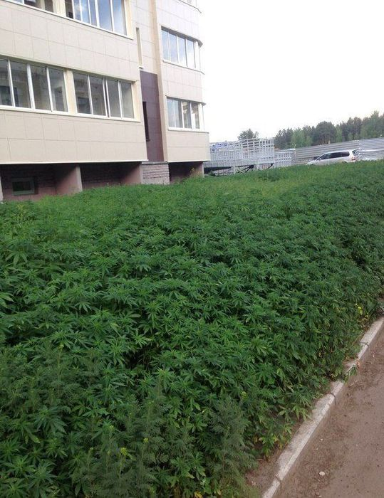 green_grass_02 (539x700, 86Kb)