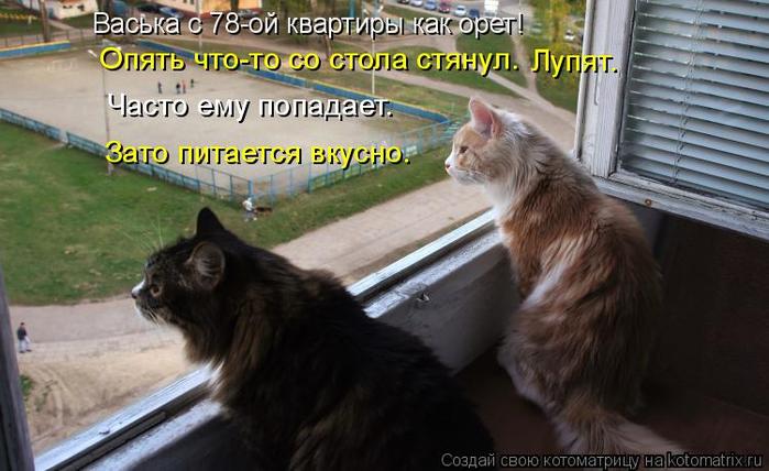kotomatritsa_Z2 (700x428, 305Kb)