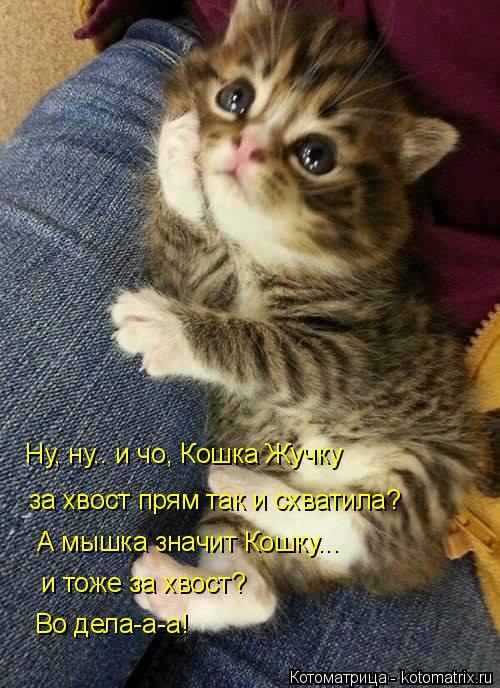 kotomatritsa__i (500x688, 402Kb)