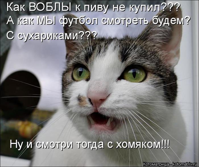 kotomatritsa_2 (700x588, 335Kb)