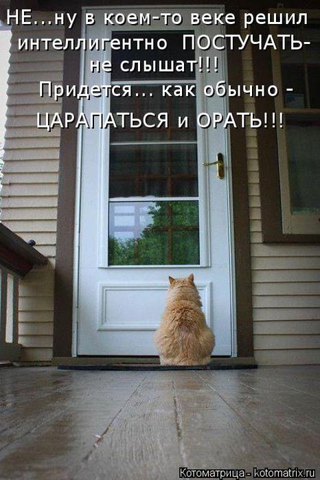 kotomatritsa_8V (466x700, 322Kb)