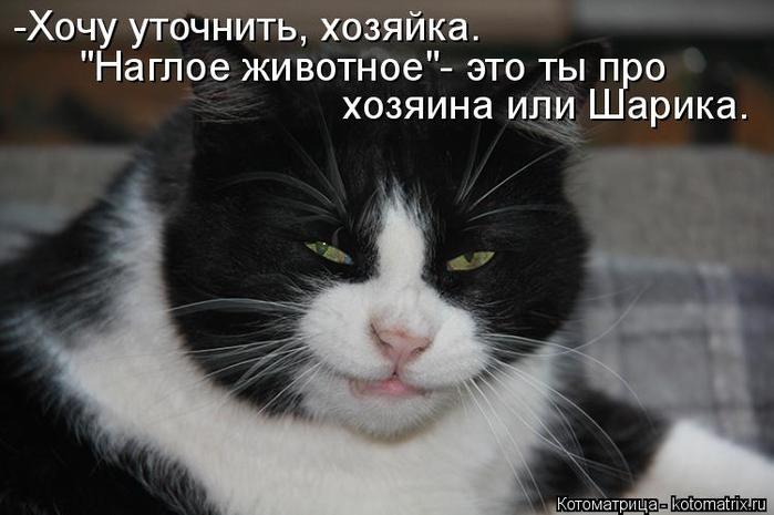 kotomatritsa_DK (700x465, 217Kb)