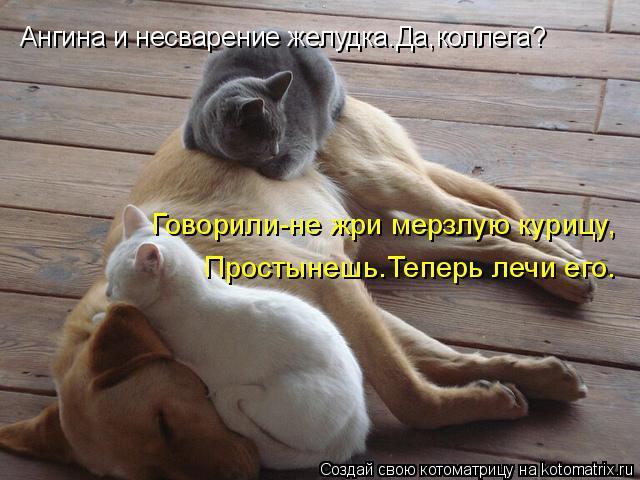kotomatritsa_f (640x480, 249Kb)
