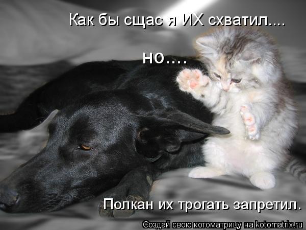 kotomatritsa_rY (600x450, 138Kb)