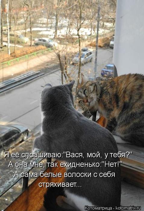 kotomatritsa_Us (478x700, 309Kb)